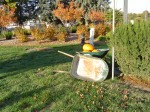 A wheelbarrow used to unload pumpkins