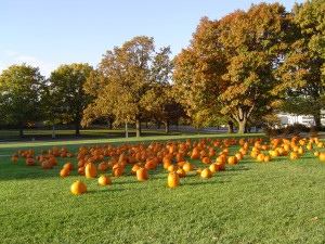 Pumpkin Patch At First United Methodist Church In Omaha
