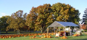 First United Methodist Church annual pumpkin patch