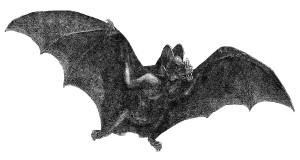 Vampire Bats: A Fascinating Species!